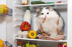 Katzenkrankenversicherung für Wohnungskatzen