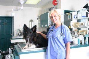 Hundekrankenversicherung Tierklinik