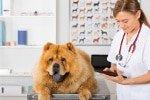 Hunde-Op Versicherung für große Hunde