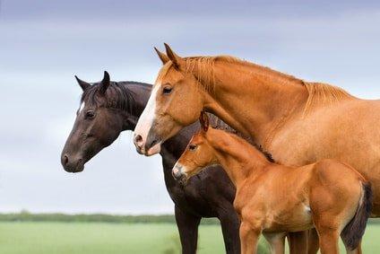 Pferdekrankenversicherung mit 100% Erstattung