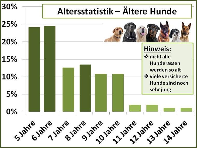 Schadensfälle bei älteren Hunden