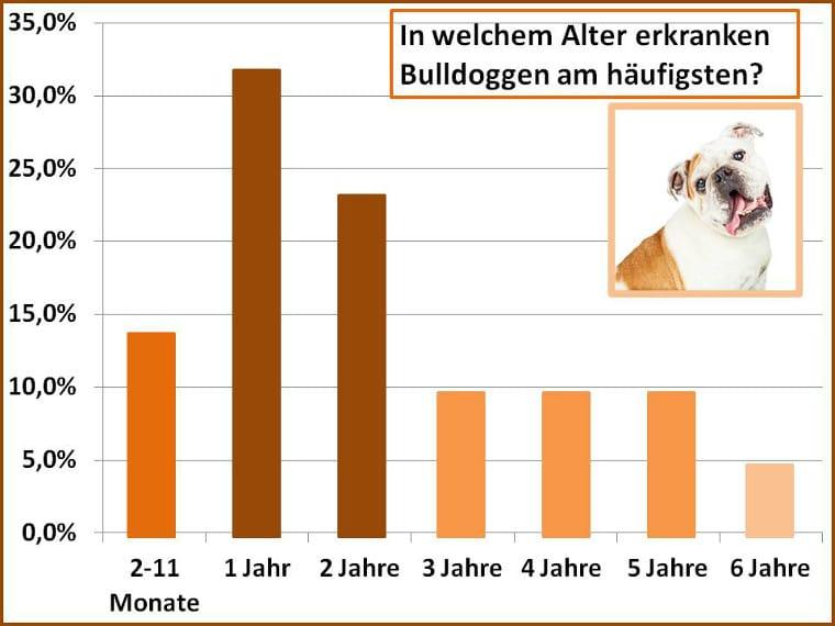 Schadensfall Altersstatistik Bulldogge
