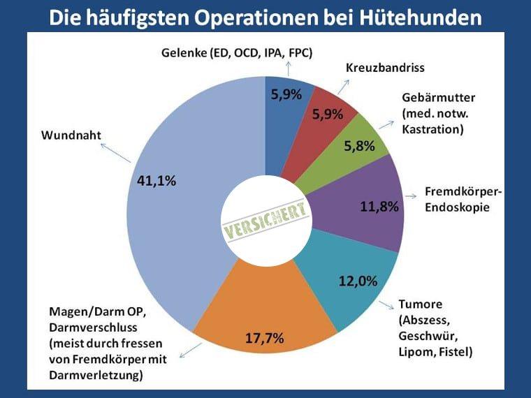 Die häufigsten Operationen beim Hütehund