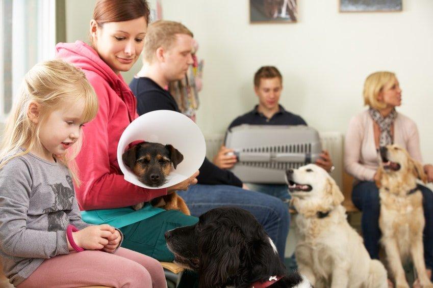 Hunde-OP Versicherung Statistik
