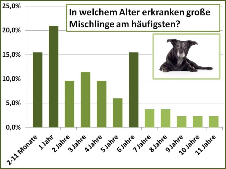 Altersstatistik für Schadensfälle beim grossen Mischling