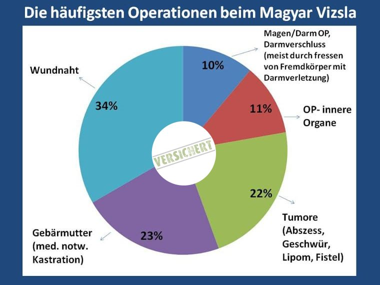 Die häufigsten Operationen beim Magyar Vizsla