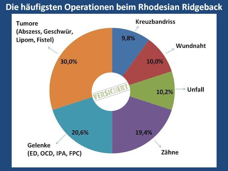 Die häufigsten Operationen beim Rhodesian Ridgeback