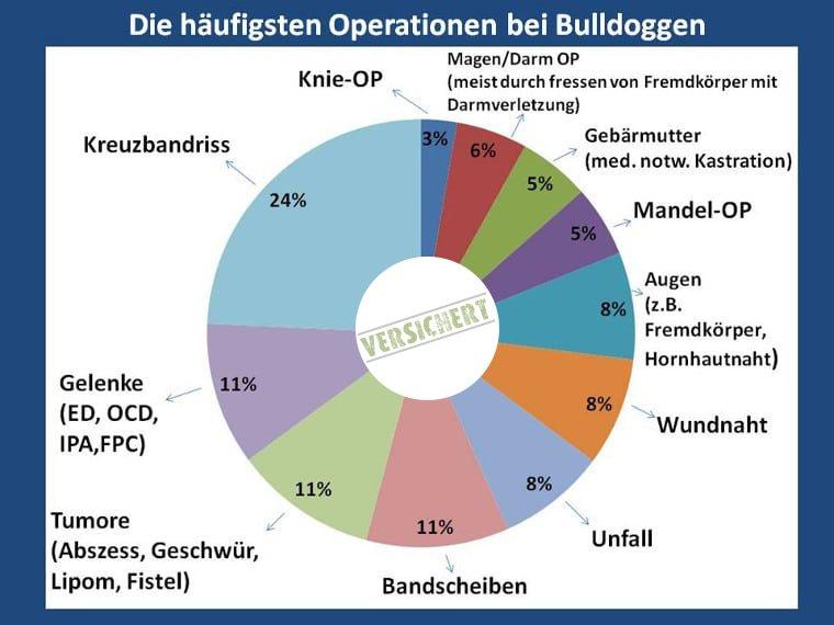 Die häufigsten Operationen bei der Bulldogge