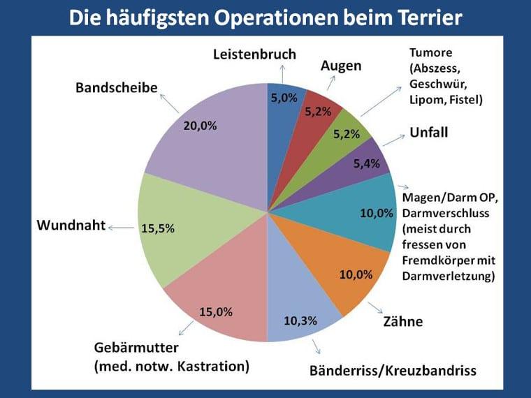 Die häufigsten Operationen beim Terrier
