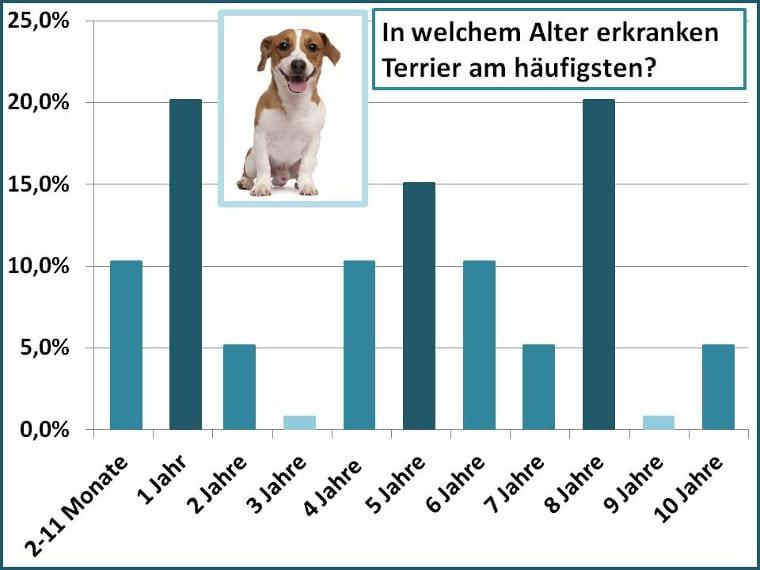 Altersstatistik für Schadensfälle beim Terrier