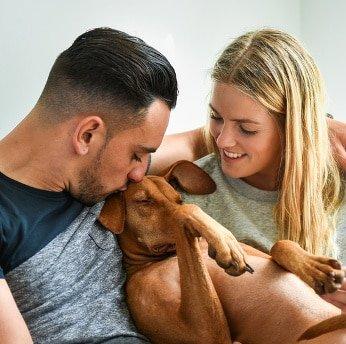 Hunde-Op Versicherung für Magyar Vizsla