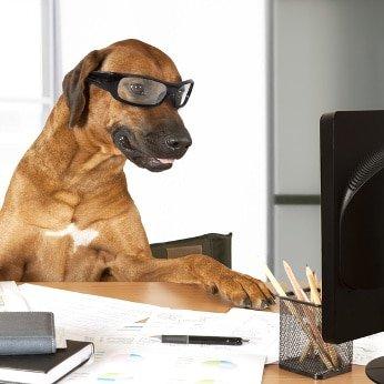 Hunde-Op Versicherung für Rhodesian Ridgeback