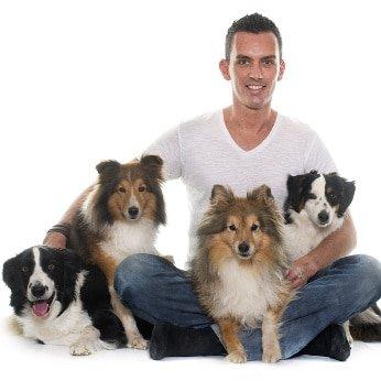 Hunde-Op Versicherung für Hütehunde