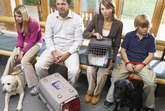 Tierarztkosten für Hund und Katze