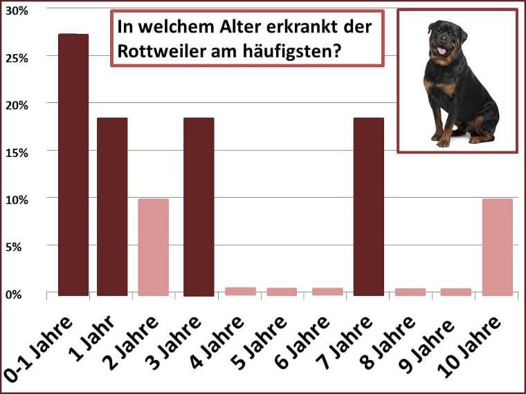 In welchem Alter erkrankt ein Rottweiler am häufigsten?