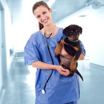 Hunde-Op Versicherung für Rottweiler