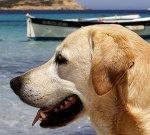 Mittelmeerkrankheit beim Hund