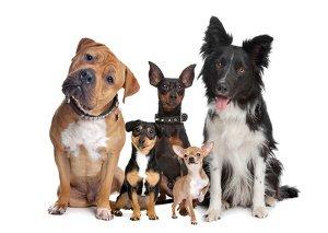 Gelenkerkrankungen bei Hunden
