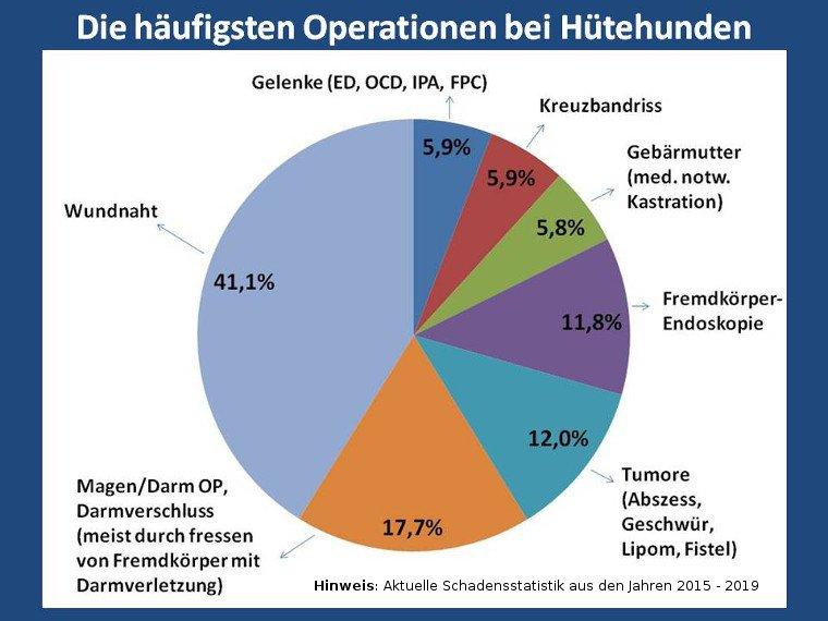 Statistik über die häufigsten Operationen bei Hütehunden