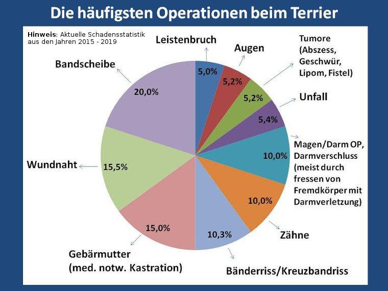 Statistik über die häufigsten Operationen beim Terrier