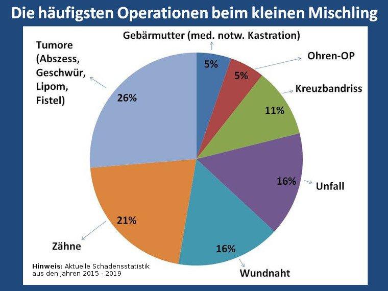 Statistik über die häufigsten Operationen beim kleinen Mischling