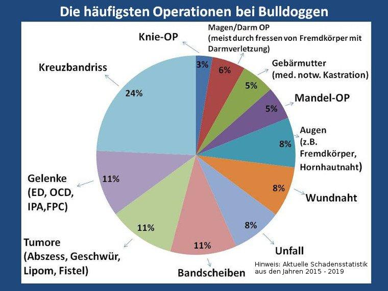 Die häufigsten Operationen bei Bulldoggen
