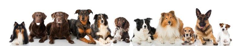 Hundehalterhaftpflicht Preisvergleich