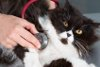 Gebärmutter OP bei der Katze