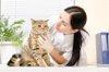 Untersuchung bei der Katze