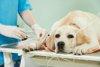 Magen Darm OP beim Hund