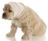 Tumore beim Hund