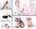 Katze Impfung