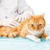 Gelenk OP´s bei Katzen