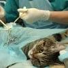 Vergiftung bei der Katze