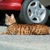 Verkehrsunfall in der Katzen-Op Versicherung