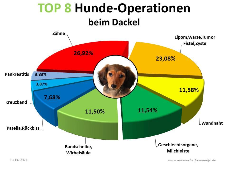 Die häufigsten Hunde-Operationen beim Dackel