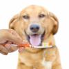 Zahnreinigung